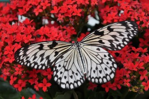 butterfly-1218884_1920